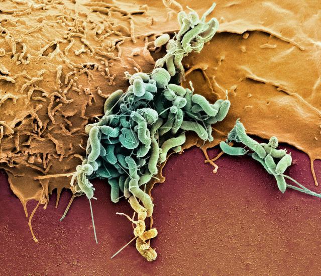 Интересные факты о микробах и бактериях нашего организма