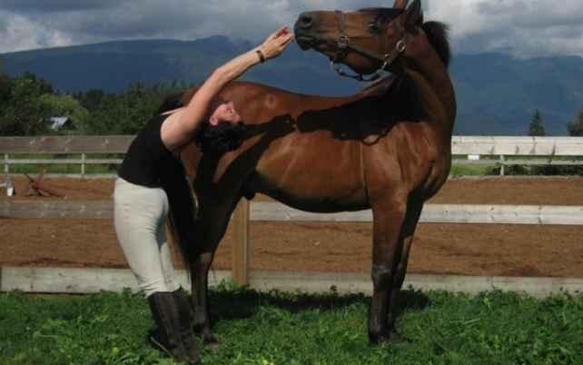 Йога с лошадью