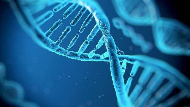 Мы выбираем супруга или супругу, чья ДНК похожа на нашу