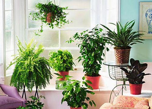 Экология в доме